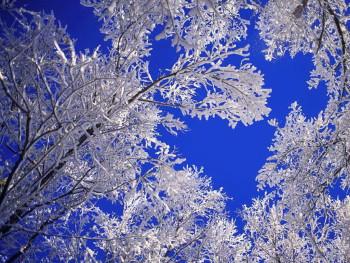 winter_034 (1)
