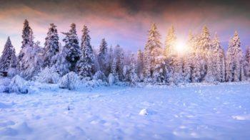 G 0-138 Природа, пейзаж, фотообои по индивидуальным размерам. Сосны, снег, зима, солнце.